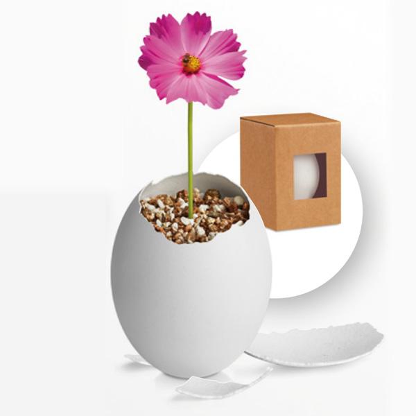 Maceta en forma de huevo con flor y caja de cartón reciclado