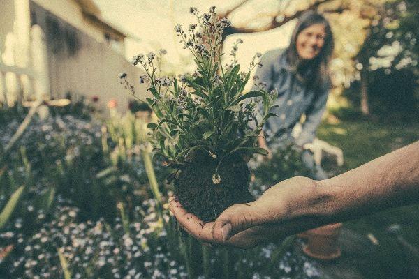 personas cultivando plantas en su jardín interior